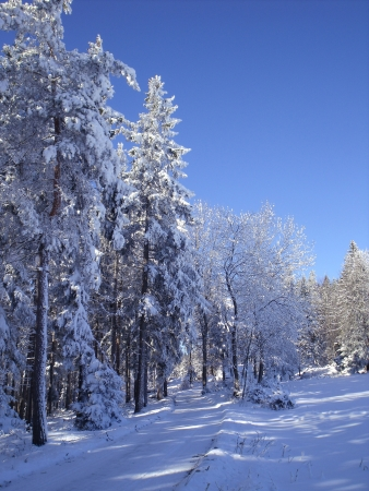 Hiking trail in snowy forests in the low mountain photo