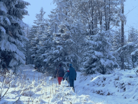 Walking in the snowy winter woods 2400 dpi scan from 6x6 slide  not interpolated magnification  photo