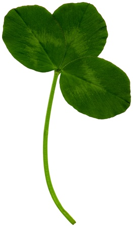 Very large clover leaf in spring on white background, exempt, 2400 dpi scan, no interpolated magnification Stock Photo - 17903744