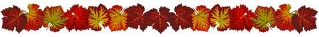 wijnbladeren: Strips van gekleurde wijnstok bladeren in de herfst
