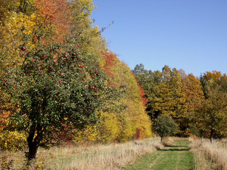 hiking trail: Autumn landscape with hiking trail and apple tree