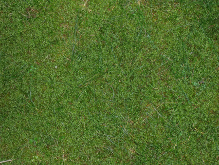 Pattern from a moss surface Stock Photo