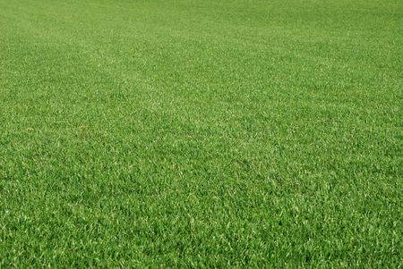 Perfect cut green grass. Stock Photo