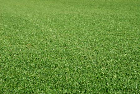 harmonic: Perfect cut green grass. Stock Photo