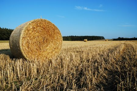 A field with some bales of straw. photo