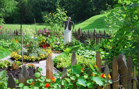 Vegetable garden with a scarecrow. photo