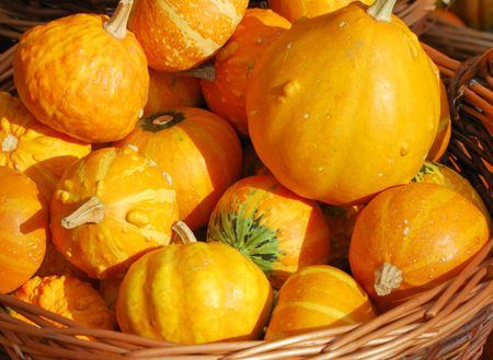 A basket full of orange pumpkins. Stock Photo - 2958696