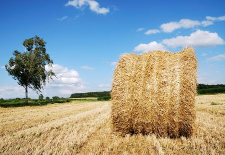 A field with a bale of straw. photo