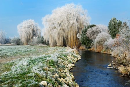 Wheeping willow at a river in Bavaria Standard-Bild