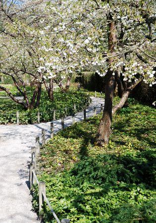 shady: Shady path between flowering trees. Stock Photo