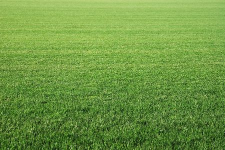 lawn: Background of perfect short cut green golf grass