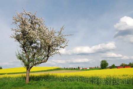 Spring scenic with a flowering tree in Bavaria photo