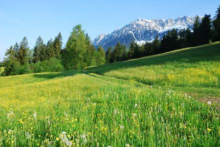 Wilder Kaiser mountains in the alps of Austria Standard-Bild