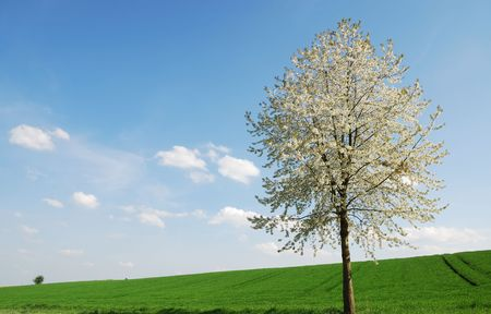 Spring scenic whith a flowering tree in Bavaria photo