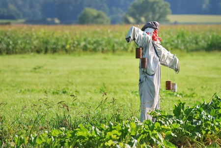 Scarecrow on a field with vegetables Stock Photo - 4391070
