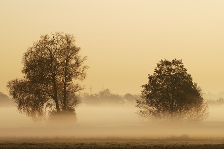 Tree silhouettes in the morning fog. photo