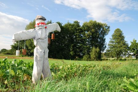 Scarecrow on a field with vegetables Stock Photo - 5516769