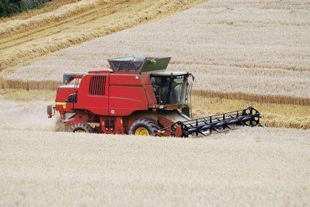 combine harvester: Cosechadoras de trabajo en un campo de ma�z.