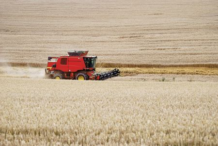 Combine harvester working at a corn field.                                     photo