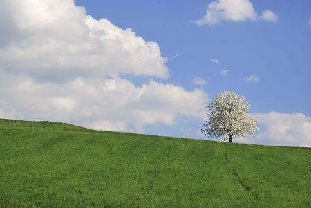 Spring scenic Stock Photo - 6201650