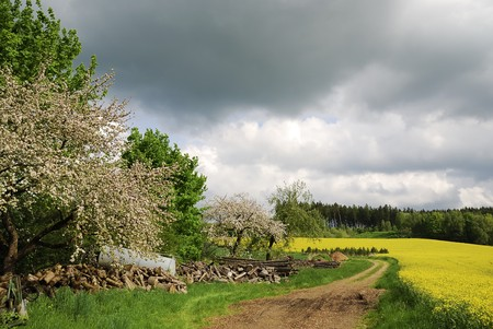 Rape filed and flowering trees in Bavaria (Germany) Stock Photo - 7514191