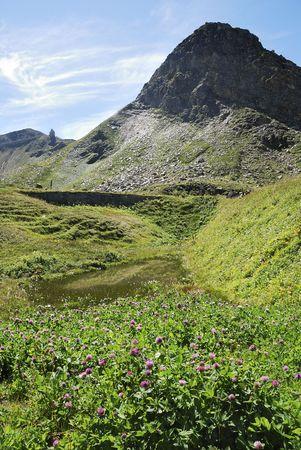 Flower meadow in Austria at the Grossglockner Hochalpenstrasse (high alpine road). photo