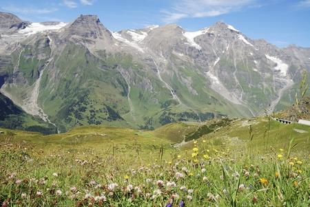 Flower meadow in Austria at the Grossglockner Hochalpenstrasse (high alpine road). Stock Photo - 8525317