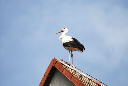 White stork on the roof of a house Stock Photo - 11572732
