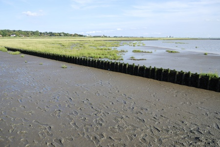 wadden: Land reclamation in the Wadden Sea (Schob�ll, Germany)