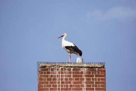 smokestack: Stork sitting on a smokestack