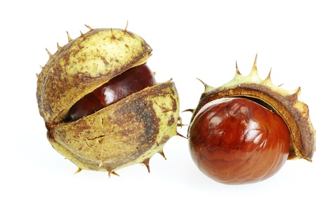 conkers: Closeup of isolated chestnuts with shell