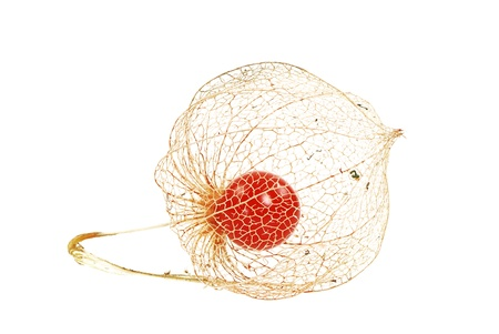 alkekengi: Seed of the chinese lantern plant Stock Photo