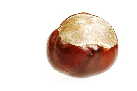conker: Closeup of a single isolated conker Stock Photo