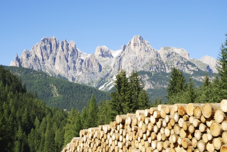 Pile of logs in the Dolomites of Italy photo