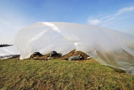 Field for growing vegetables covered by a plastic foil photo