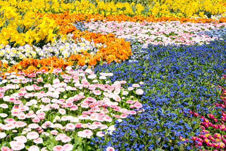 A sea of various gorgeous spring flowers (daffodil, pansy, forget-me-not) photo