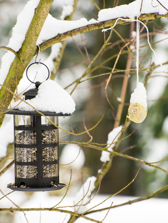 full filled: Bird feeder filled with sunflower seeds in the snow