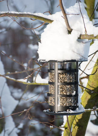 semillas de girasol: Alimentador del p�jaro lleno de semillas de girasol en la nieve