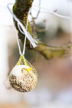 fat bird: Feeding birds in winter with a fat ball