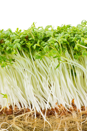 cress: Bunch of isolated garden cress sprouts Stock Photo