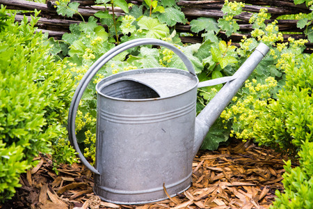 wateringcan: Vintage watering can in the garden Stock Photo