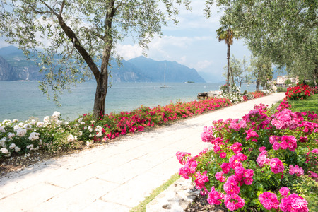 lake front: Flowers at the water front of Lake Garda (Italy)