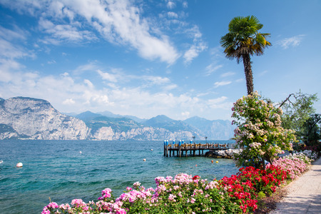 flower tree: Flowers at the water front of Lake Garda (Italy)