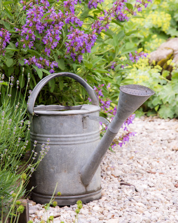 vegetable tin: Vintage watering can in the garden Stock Photo