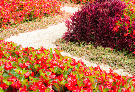 flowerbed: Curved sidewalk through a flowerbed full of red flowers Stock Photo