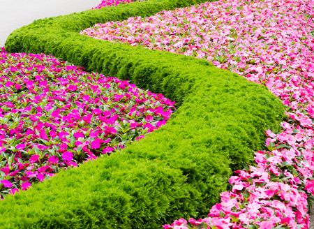 massif de fleurs: Parterre de fleurs d'un motif formant une ligne sinueuse. Banque d'images