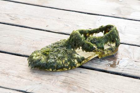 footware: Old wet shoe full of algae Stock Photo