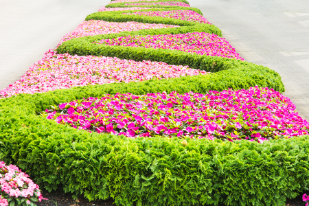 flowerbed: Flowerbed with a pattern forming a sinuous line.