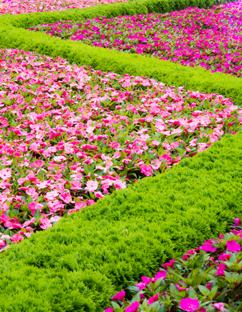 lizzie: Flowerbed with a pattern forming a sinuous line.