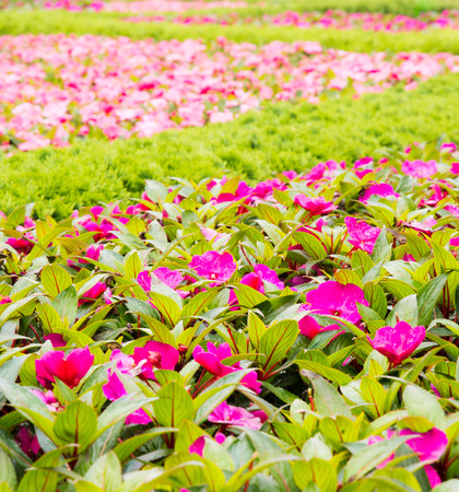 flower bed: Flower bed with shallow depth of field.